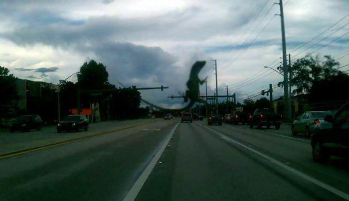 Photo Of Lizard On Windshield Looks Like Godzilla Is Crushing My Town