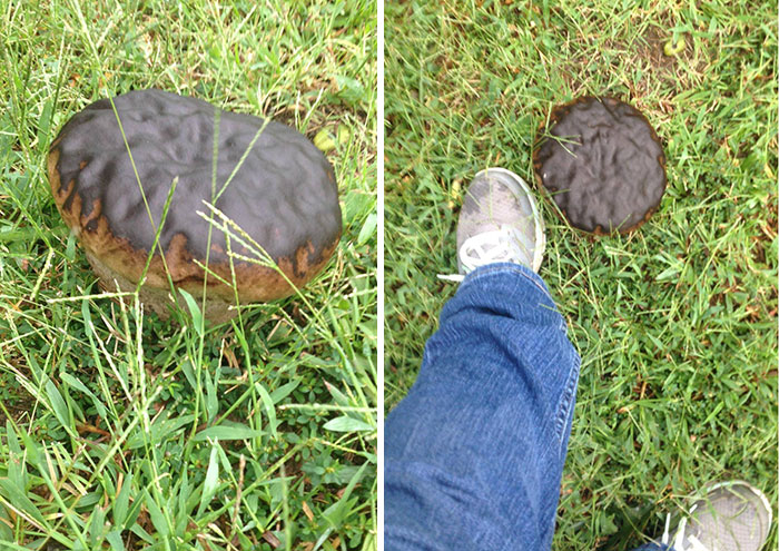 This Mushroom In My Yard Looks Just Like A Giant Chocolate Donut