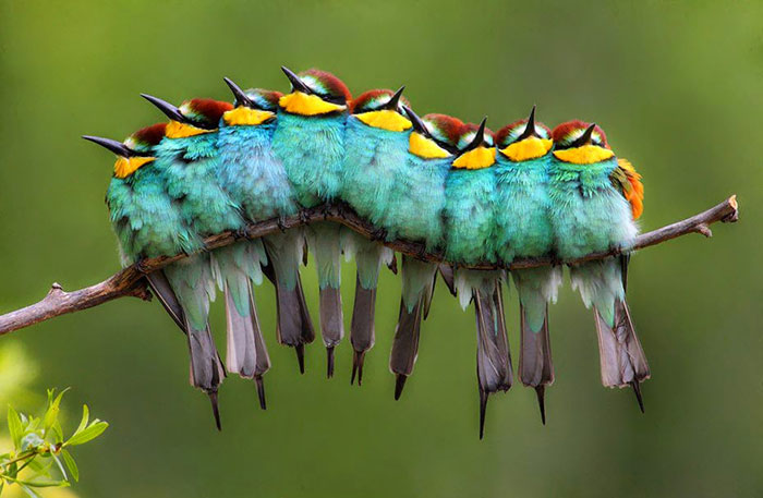 This Is Not A Caterpillar