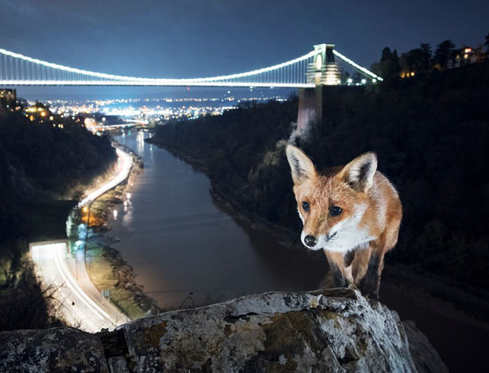 This Photographer Shoots Wildlife In European Cities