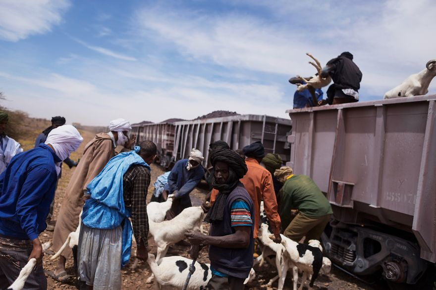 Freight Train Hopping In Mauritania: 4000 Kilometers In A Cargo Carriage With Local Shepherds And Their Sheep