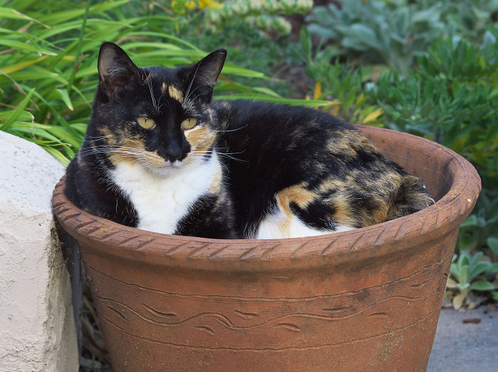 I Am Not A Potted Plant
