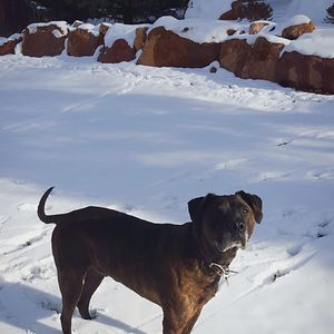 My Best Friend Eddie, 11 Years Old, Colorado Springs, Co.