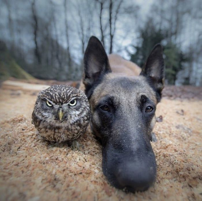 This Dog And Owl Dropping Their New Album