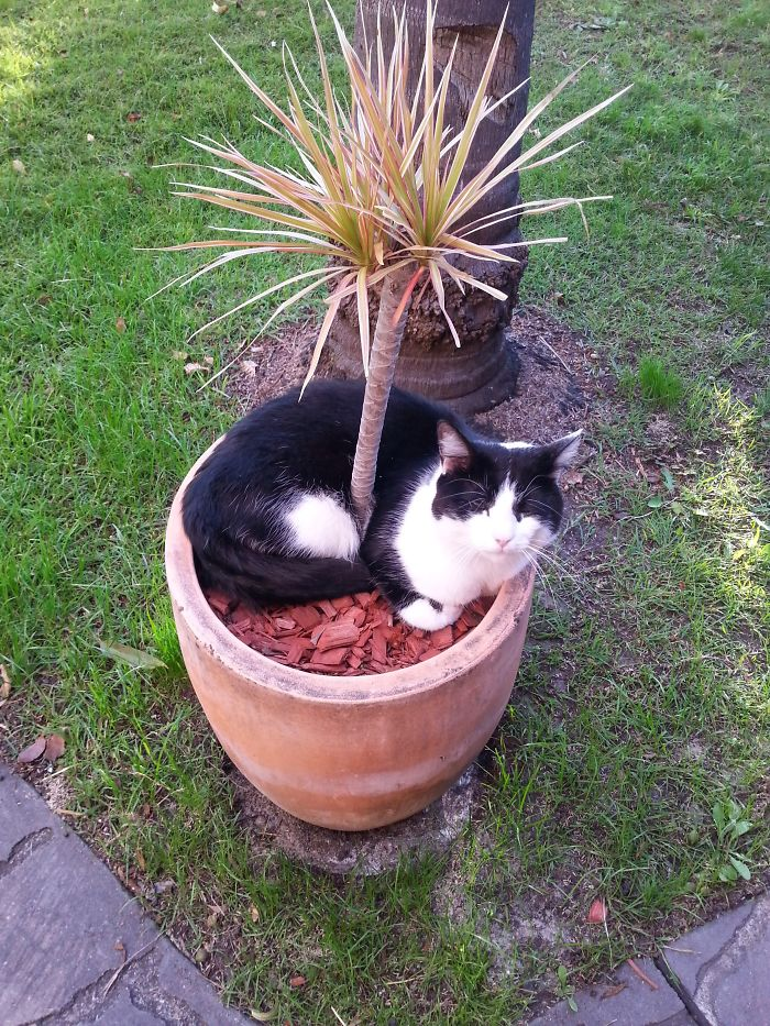 I Am A Potted Plant