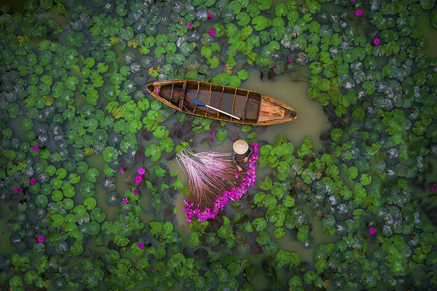 Waterlily, Vietnam (People - 2nd Place)