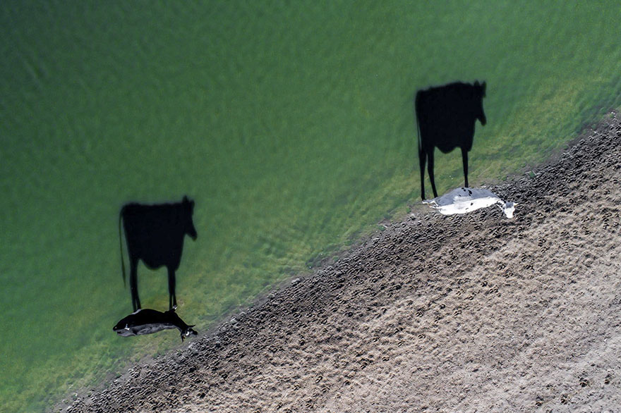 Two Moo, South Africa (Creativity - Finalist)