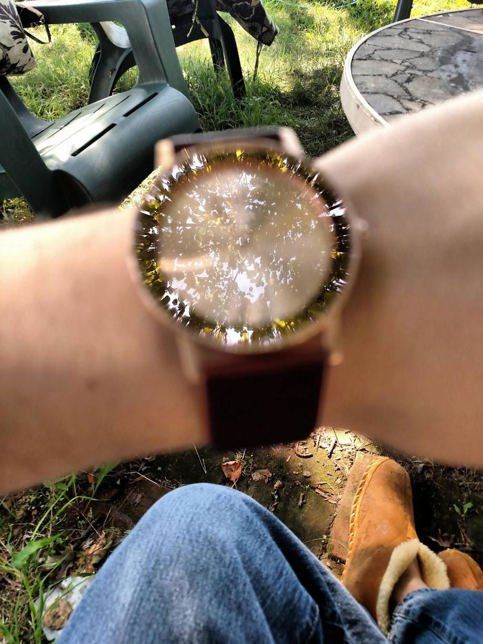 The Camera Focused On The Reflection Of The Tree Instead Of The Watch