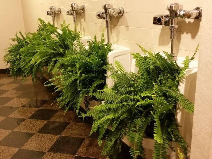 Este hotel convirtió un cuarto de baño masculino en femenino, y así reutilizaron los urinarios