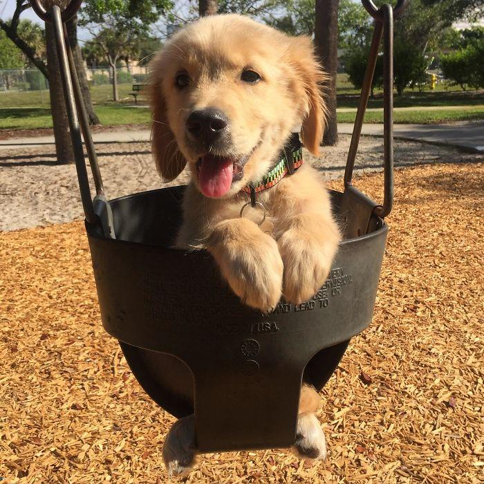 Took My Golden Retriever Puppy To The Park