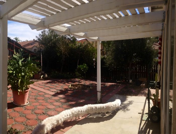 Taking A Panorama Of The Yard When The Dog Walked By
