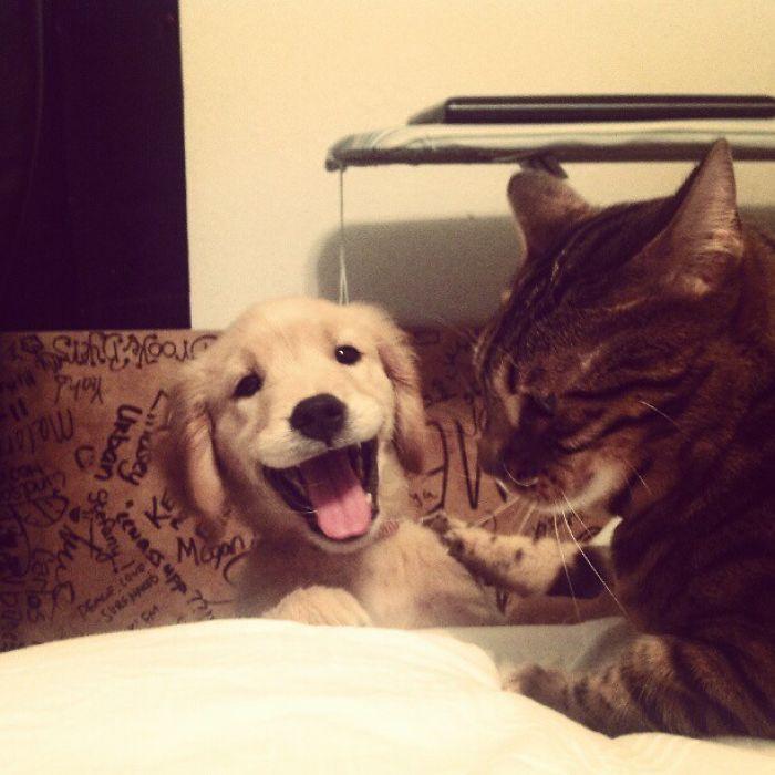 Haciéndose amigo del gato
