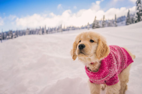 Playing In The Fresh Snow