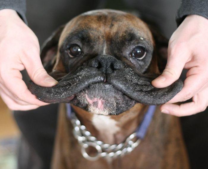 Squishy Dog Cheeks