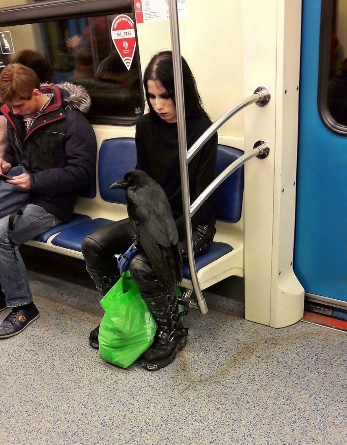 Just A Girl And Her Raven On The Subway