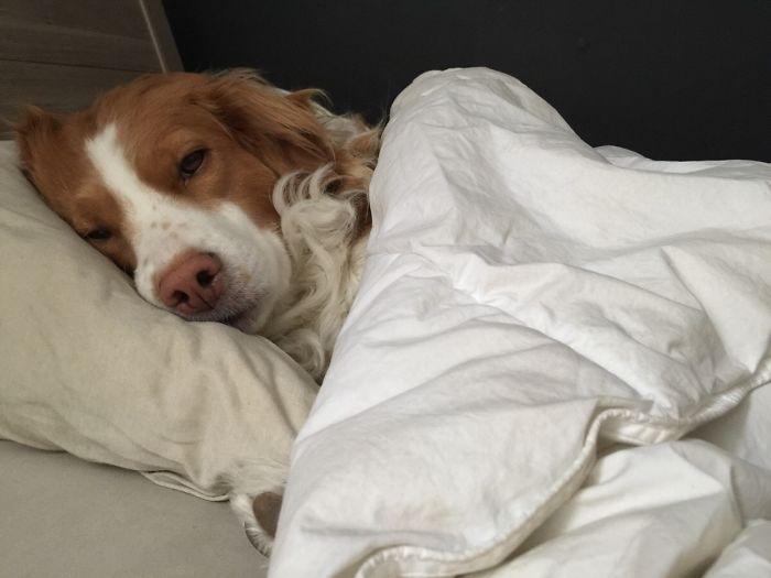 Mi perro ocupa el sitio de mi novia cuando se va a trabajar. Con esto me desperté hoy