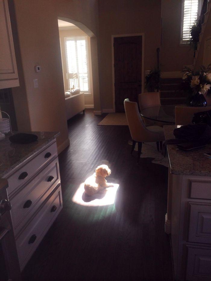 Me desperté y encontré al perro así