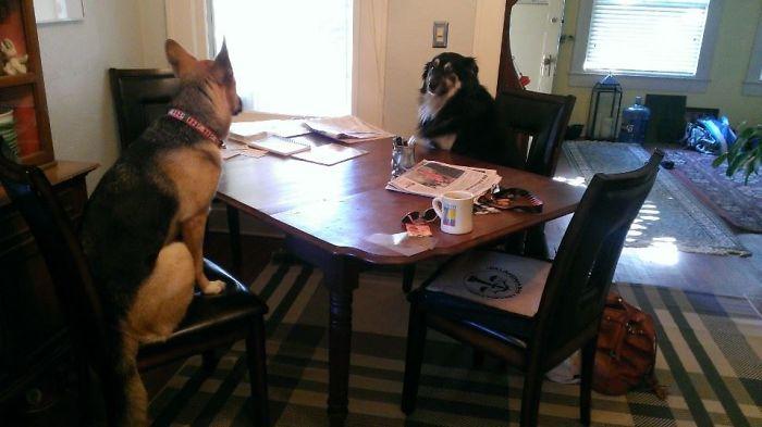 Me desperté y al ir al comedor los encontré así