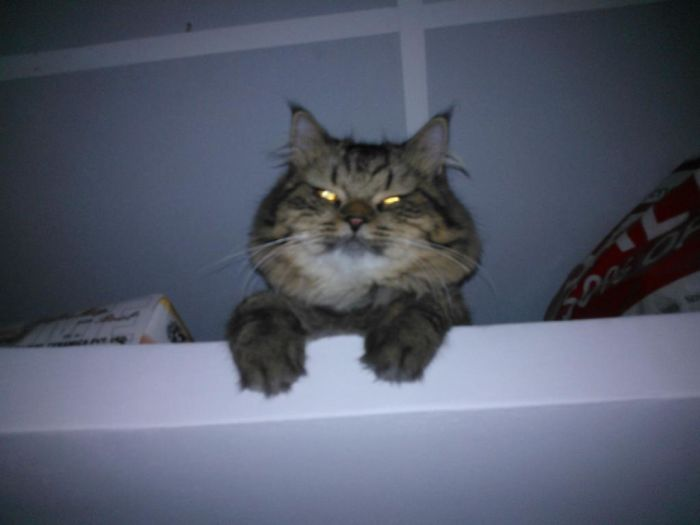 Woke Up In The Middle Of The Night To Drink Water And Suddenly I See Our Cat Staring At Me