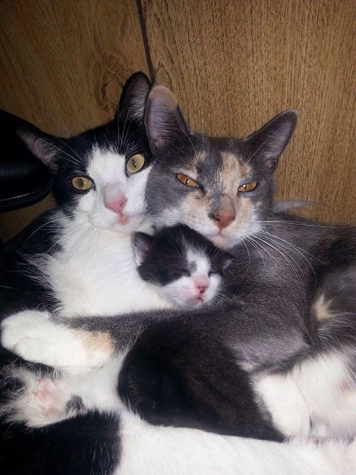 Me desperté y encontré a estos 2 acurrucados con su bebé