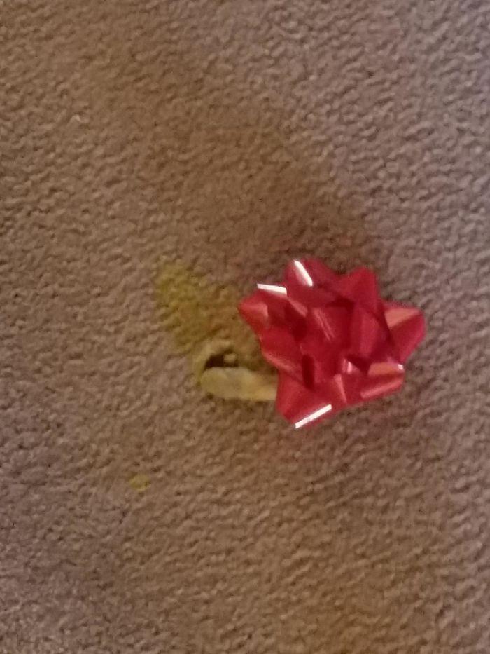 Tengo un gato que cubre sus bolas de pelo con lo que encuentra. Me desperté hoy y vi esto