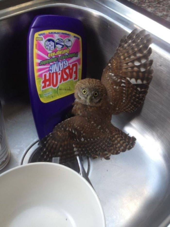 Woke Up This Morning And Went To The Kitchen To Find A Baby Owl