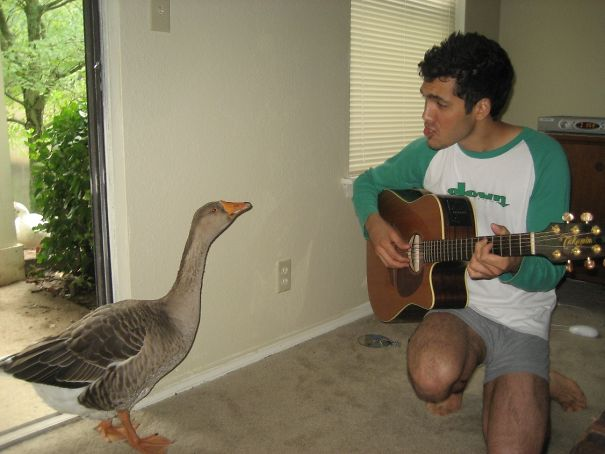 Living Alone In Nashville, I Used To Wake Up Every Morning To This Gal (She's Wild) Squawking For Food At My Back Slider. One Morning I Serenaded Her With My Guitar. The Next Week She Made A Nest And Laid Eggs On My Patio. I Named Her Greta