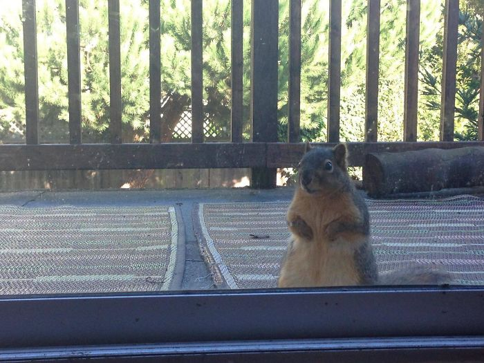 If You Feed A Squirrel Peanut Butter, You'll Wake Up To This At Your Backdoor Every Morning