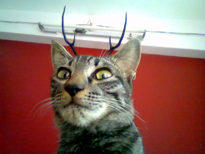 I Have Deer Antlers Up On My Wall. And A Cat. Woke Up To This