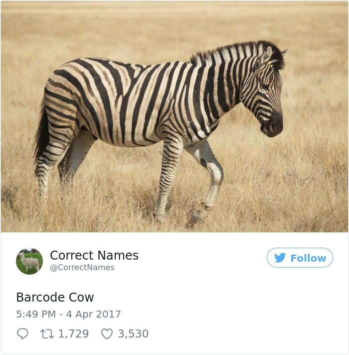 Correct Name