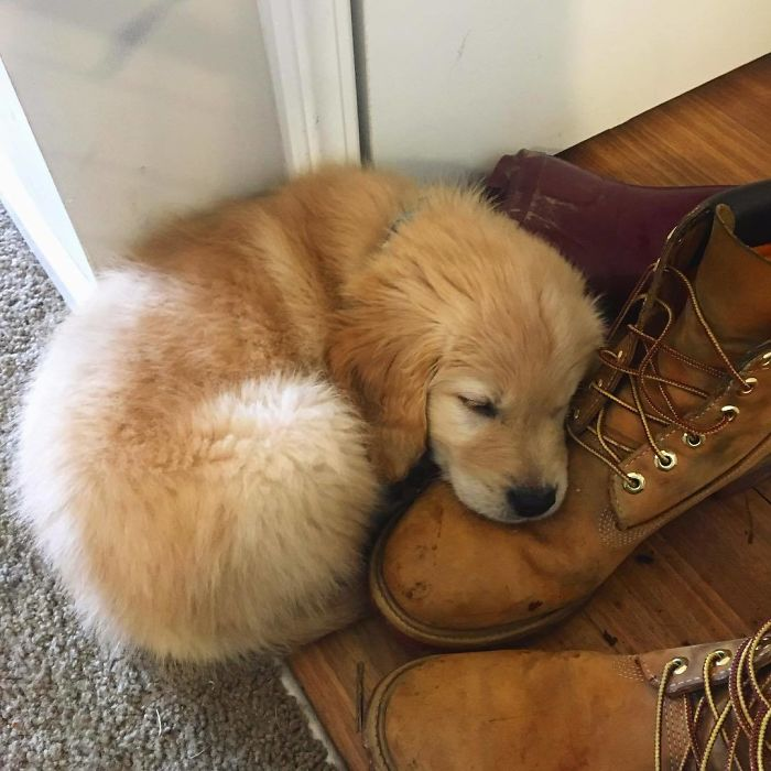 Daddy's Shoe Also Makes A Pretty Good Pillow