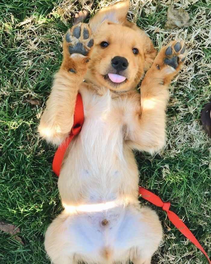 Paws In The Air Like I Just Don't Care