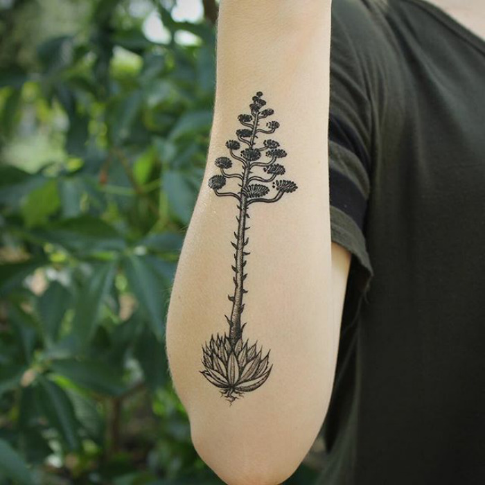 Succulent-tattoo-designs