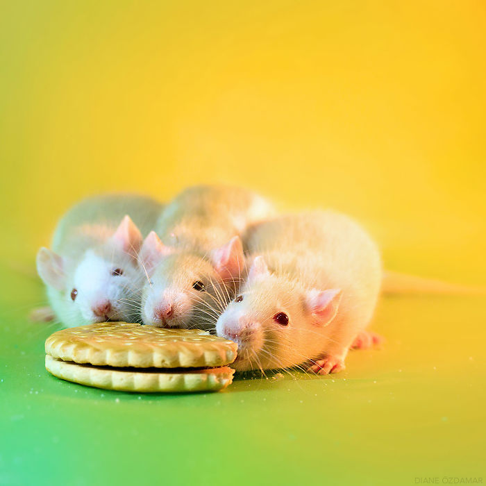 Breakfast Time! (Pagello, Feirefiz And Inoa)