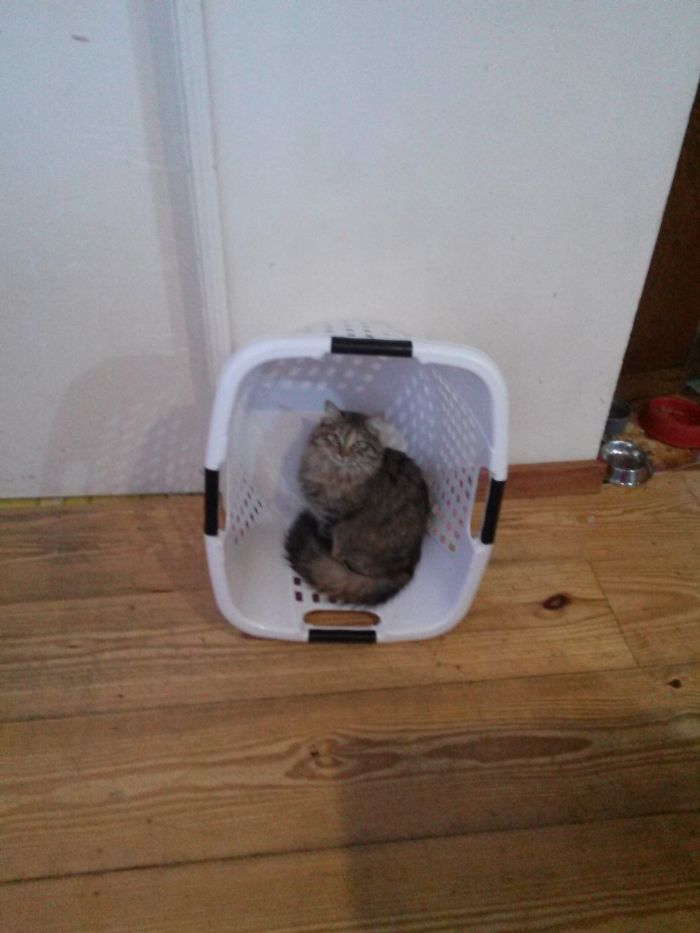 Not A Tight Fit, But I Sits As Laundry