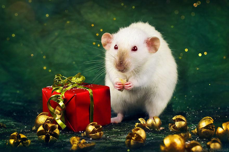 Jingle Bells! (Caprice)