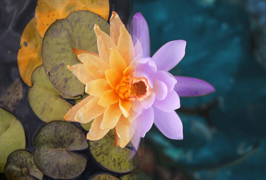 Sydney Flora In Australia Vs Bali Flora In Indonesia