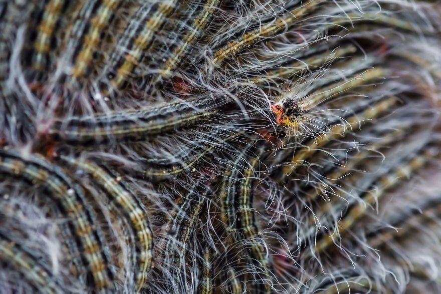 Caterpillar Cuddle Up