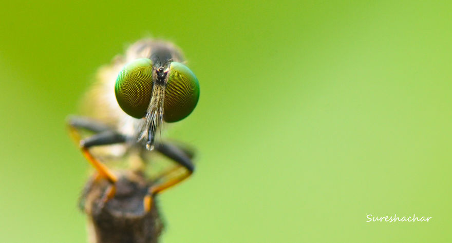 I Take Macro Pictures Of Insects