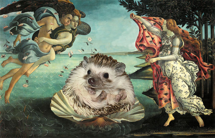 Birth Of A Hedgehog Princess