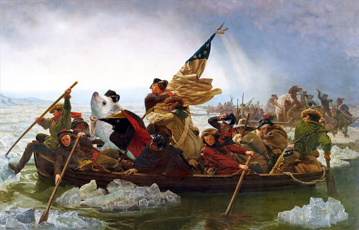 Hedgehog Crossing The Delaware