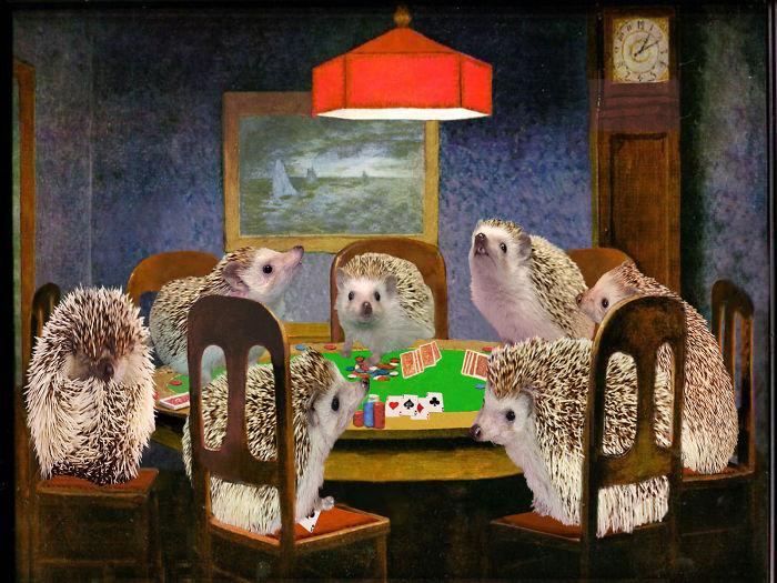 Hogs Playing Poker