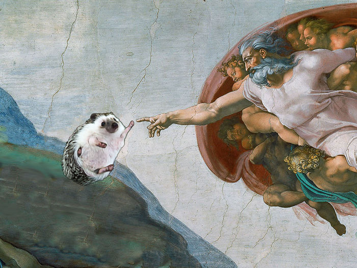 The Creation Of Hedgehog