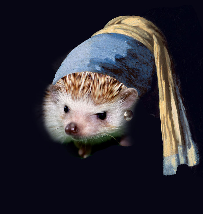 Vermeer's Hedgehog With A Pearl Earring