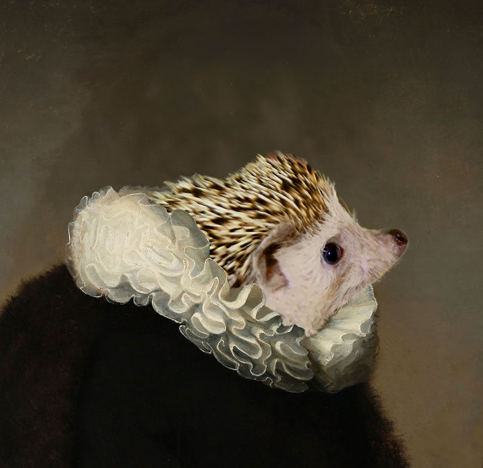 Rembrandt's Hedgehog Noble Portrait