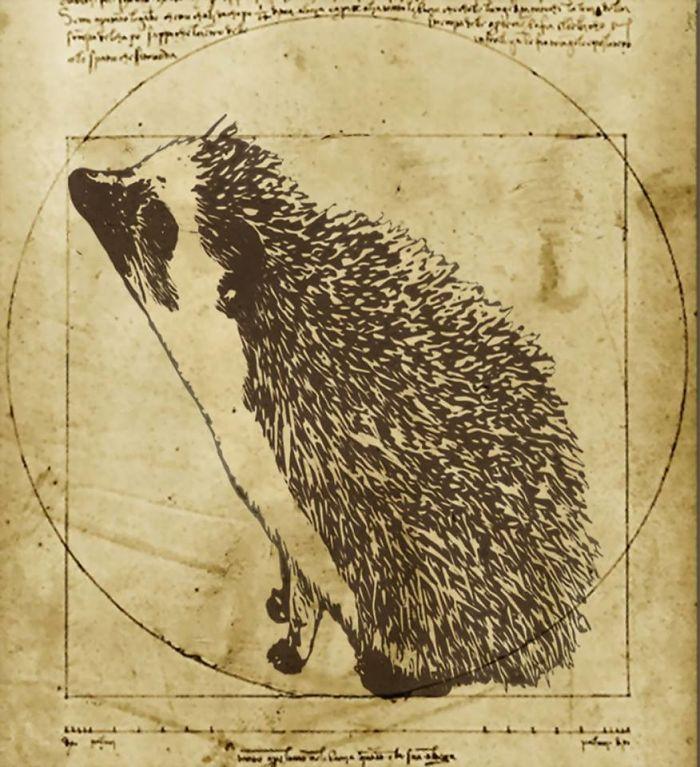 Vitruvian Hedgehog (c. 1490)