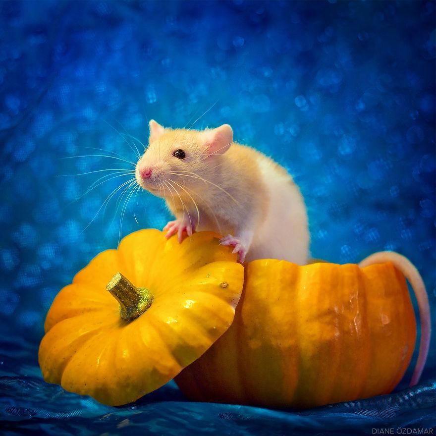 This Is Halloween (Feirefiz)