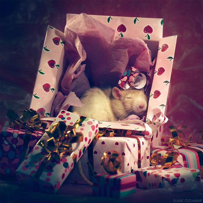 Christmas Nap Time (Feirefiz)