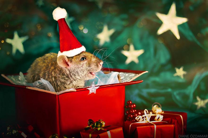 Ho Ho Ho! (Fenrir)
