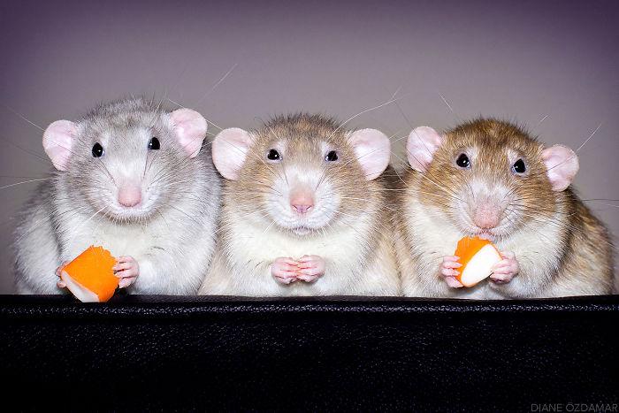 Brothers Enjoying A Snack (Izumi, Lysander And Kaelan)